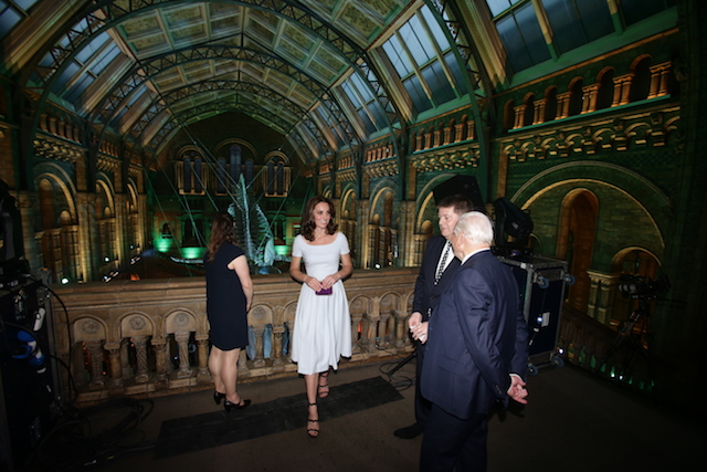 LONDON UNITED KINGDOM- JULY 13 Catherine Duchess of Cambridge and Sir David Attenborough are shown a blue whale skeleton named Hope by museum director Sir Michael Dixon during the reopening of Hintze Hall at the Natural History Museum on July
