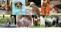 The 50 Most Beautiful Dogs Of Washington, D.C.: Summer, '17