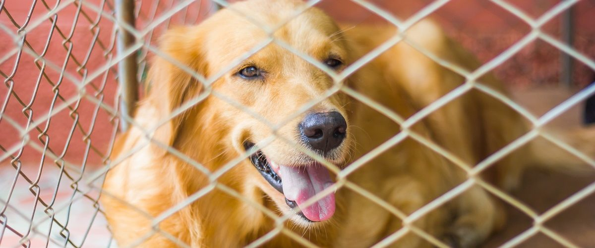 Dog in a cage. sraphotohut/Shutterstock.
