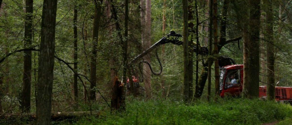 Logging machine is pictured during logging at Bialowieza forest, near Bialowieza village