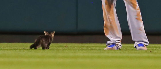 ST. LOUIS, MO - AUGUST 9: Lorenzo Cain #6 of the Kansas City Royals watches a kitten run across the outfield in the sixth inning during a game against the St. Louis Cardinals at Busch Stadium on August 9, 2017 in St. Louis, Missouri.  (Photo by Dilip Vishwanat/Getty Images)