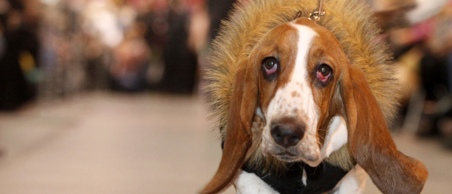 A basset hound wears a creation during an animals' winter dress show, part of the World Zoo exhibition, in Russia's Siberian city of Krasnoyarsk January 10, 2010. REUTERS/Ilya Naymushin (Photo Credit: Reuters)