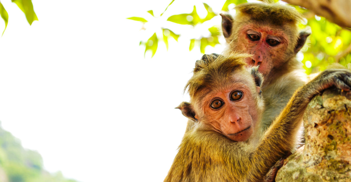 Shutterstock/ Monkeys on tree. Monkey portrait