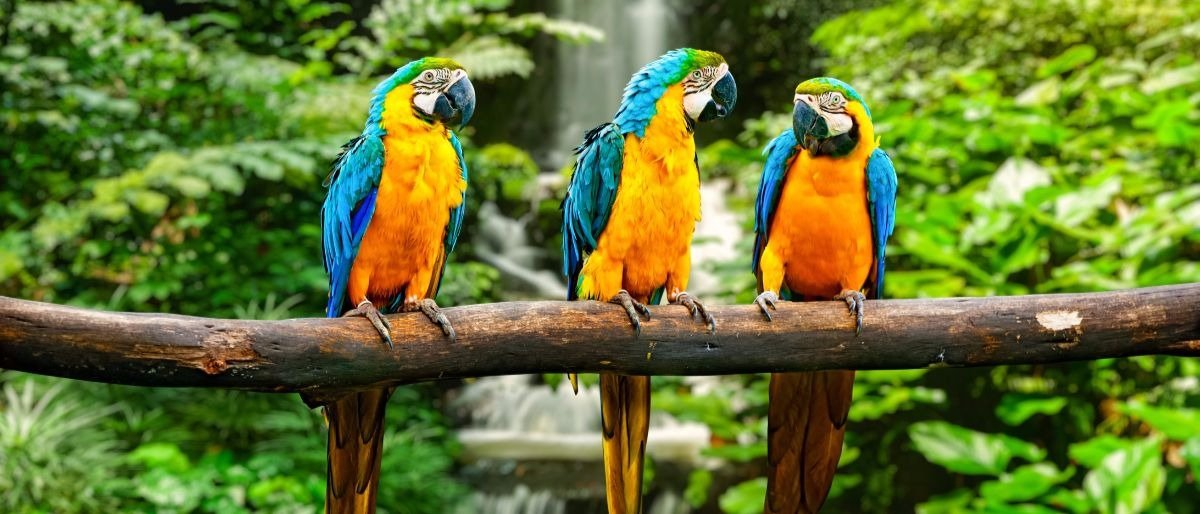 rainforest Shutterstock/DR Travel Photo and Video