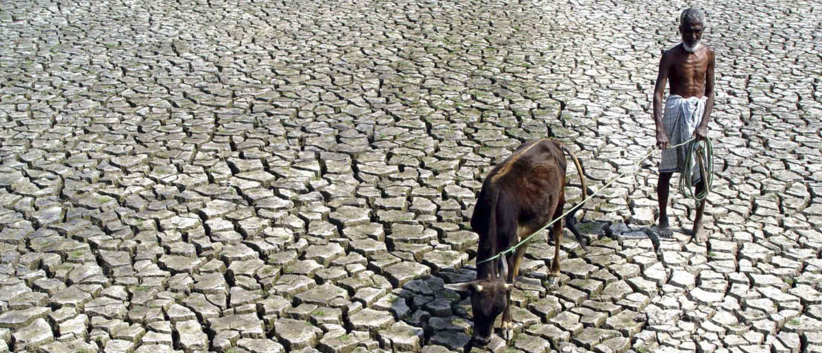 An Indian farmer walks with his hungry cow through a parched paddy field in Agartala, capital city of India's northeastern state of Tripura, March 10, 2005. REUTERS/Jayanta Dey