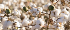 People Are Calling For A Total Ban On Cotton Because — You Guessed It — Racism