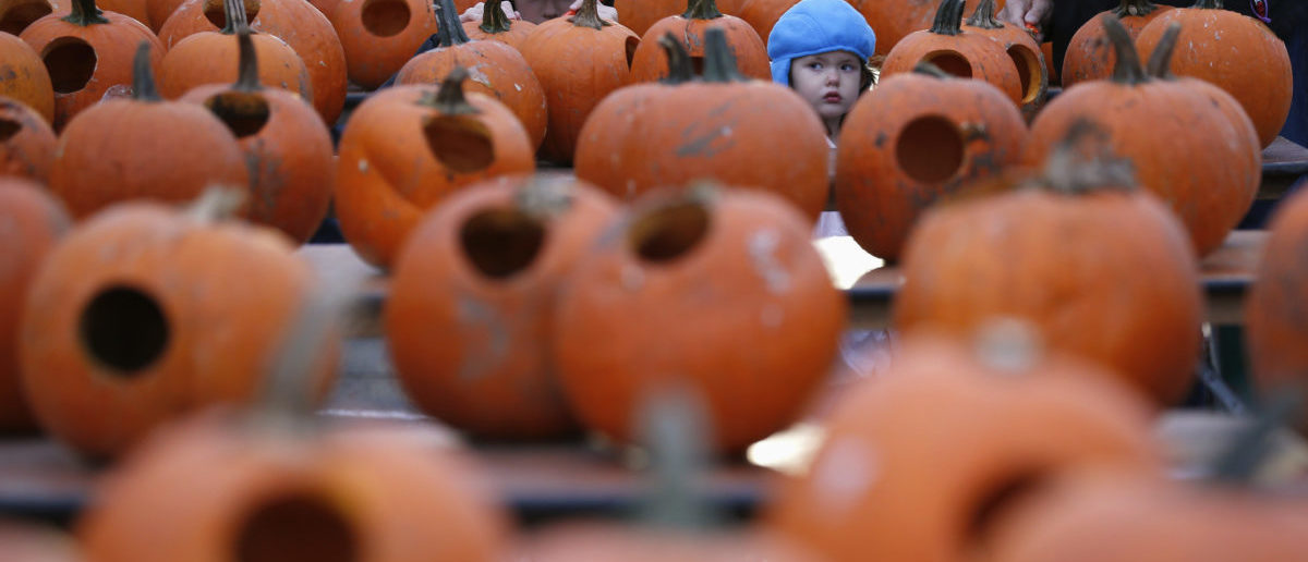 A girl walks among thousands of pumpkins, which are carved, at the Great Highwood Pumpkin Festival in Highwood, Illinois, October 18, 2013. Organizers are trying to set the Guinness Book of World Records for the most lit jack-o'-lanterns on display. REUTERS/Jim Young