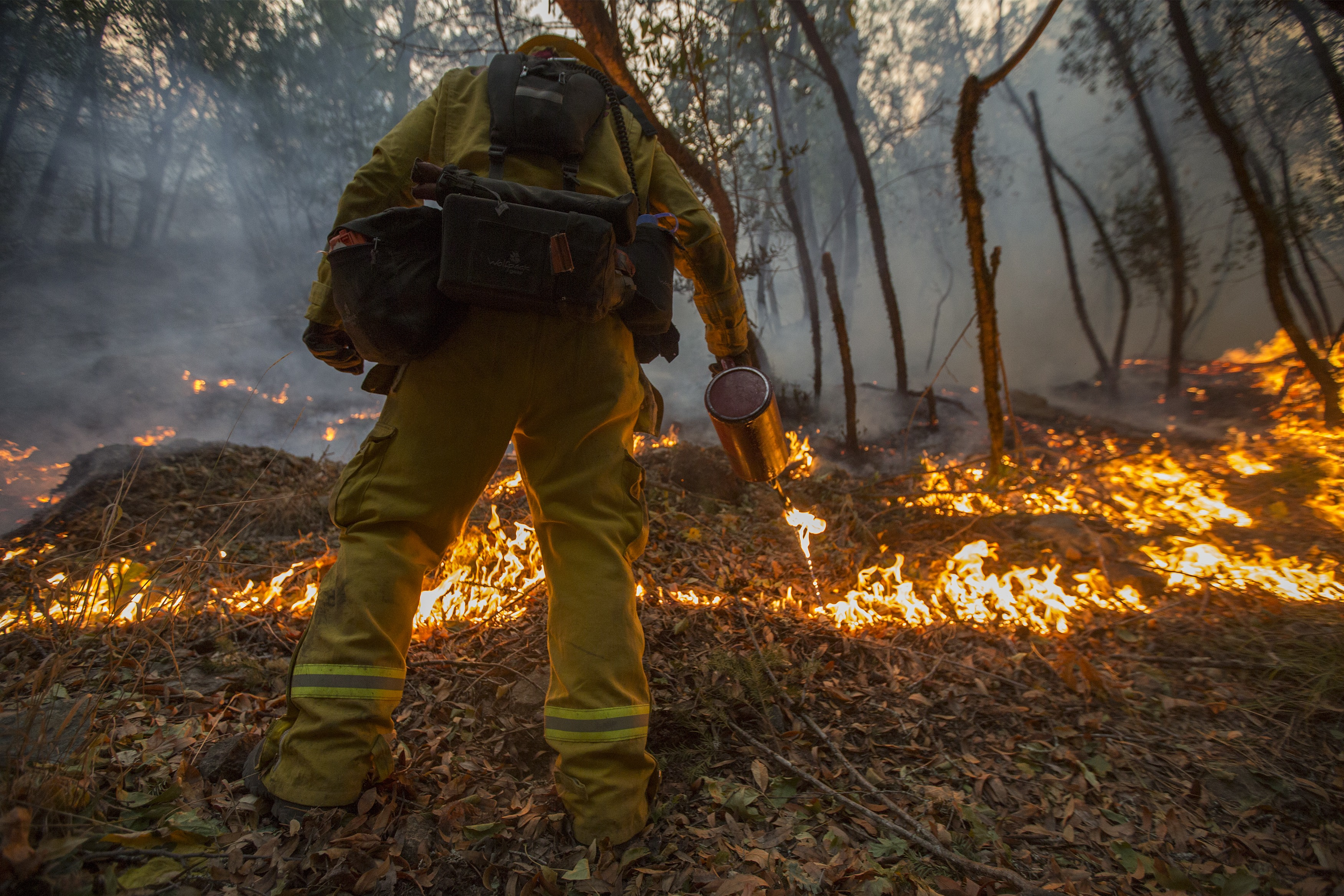 SANTA ROSA, CA -OCTOBER 15: A firefighter uses a drip torch to set a backfire to protect houses in Adobe Canyon during the Nuns Fire on October 15, 2017 near Santa Rosa, California. At least 40 people were killed while many are still missing, and at least 5,700 buildings have been destroyed since wildfires broke out a week ago. (Photo by David McNew/Getty Images)