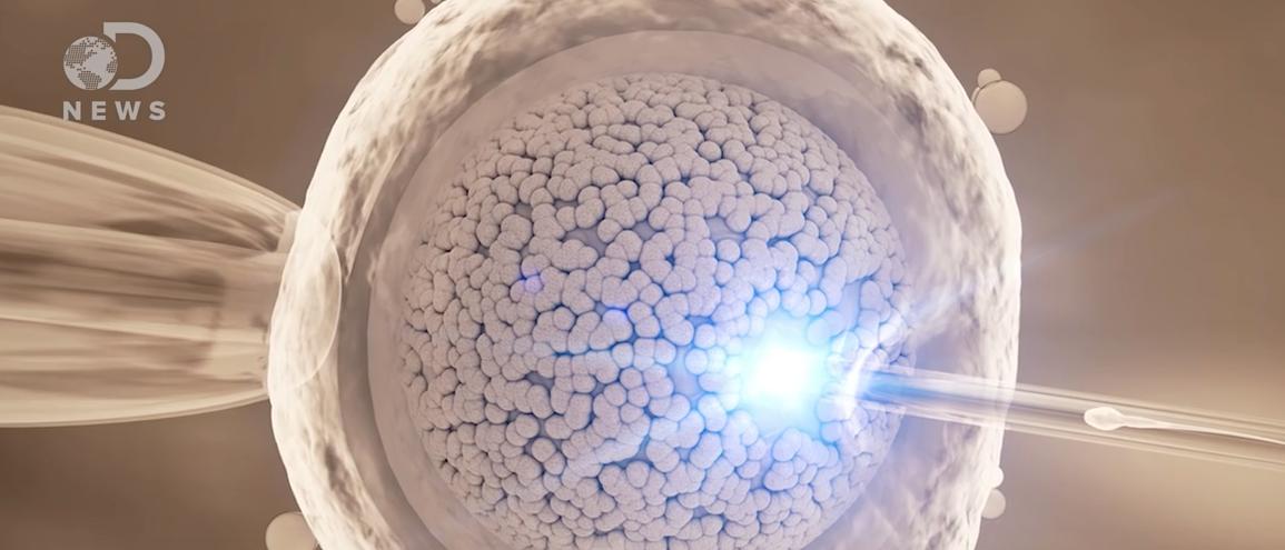 Sperm swimming to egg. (Youtube screenshot/Seeker)