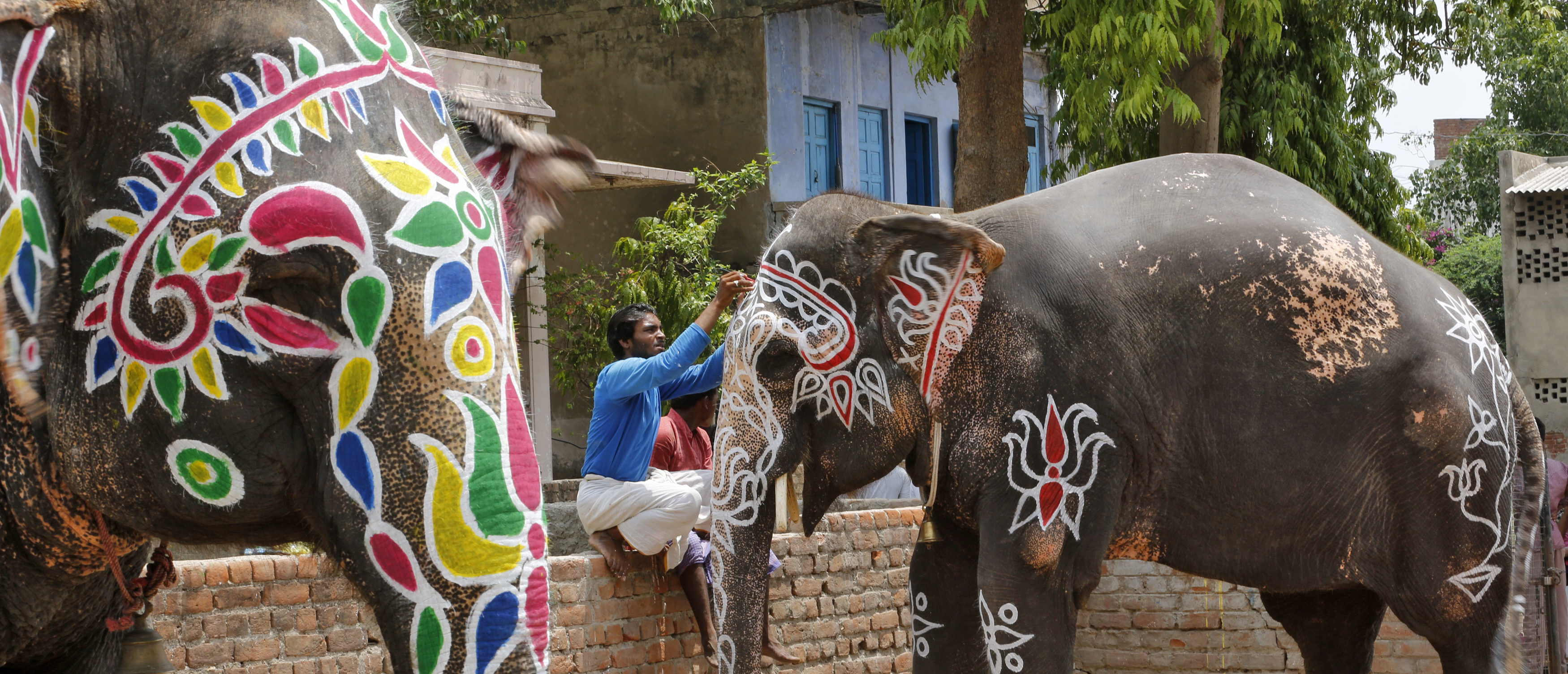 A mahout paints his elephant on the eve of the annual Rath Yatra, or chariot procession, outside the Jagannath temple in Ahmedabad, India, July 5, 2016. REUTERS/Amit Dave