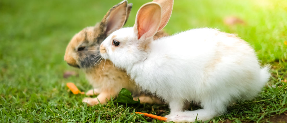 Poland is trying to get citizens to breed like rabbits in a new bizarre commercial Photographer2463(Shutterstock)