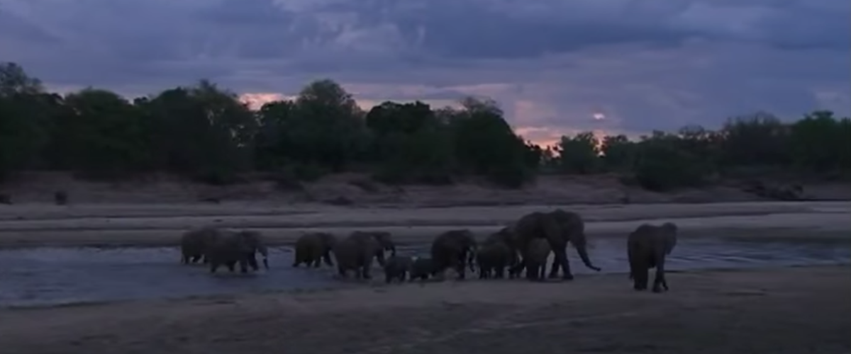 Elephants in Zambia (You Tube - Lion Mountain TV)