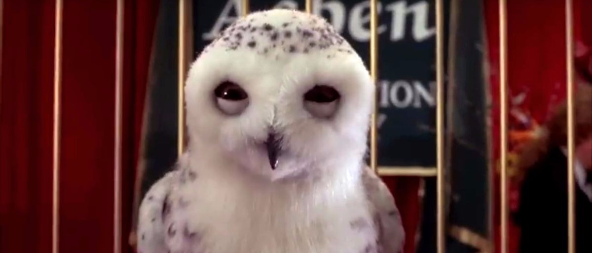 rare snow owl YouTube screenshot/somemoviescenes