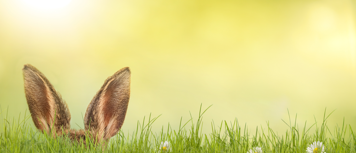 An Easter bunny is hiding in a meadow. (Photo: Shutterstock/ Photo-SD)