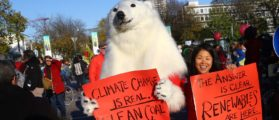 """A protester dressed as a polar bear attends a demonstration under the banner """"Protect the climate - stop coal"""" two days before the start of the COP 23 UN Climate Change Conference hosted by Fiji but held in Bonn, Germany November 4, 2017. REUTERS/Wolfgang Rattay"""