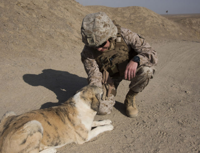Maj. Kendra Motz kneels down to give an Afghan dog a final pet before heading back to Camp Shorab, where she serves as a Public Affairs Officer for Task Force Southwest. (Hailey Sadler)