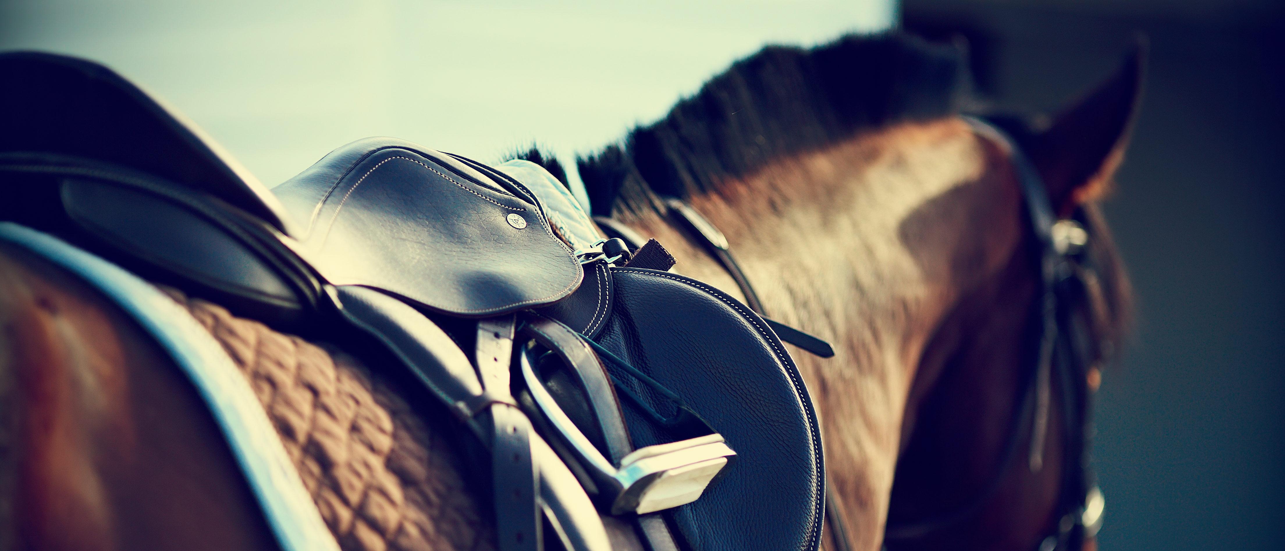 Pitcture of horse. (Shutterstock/Elya Vital)