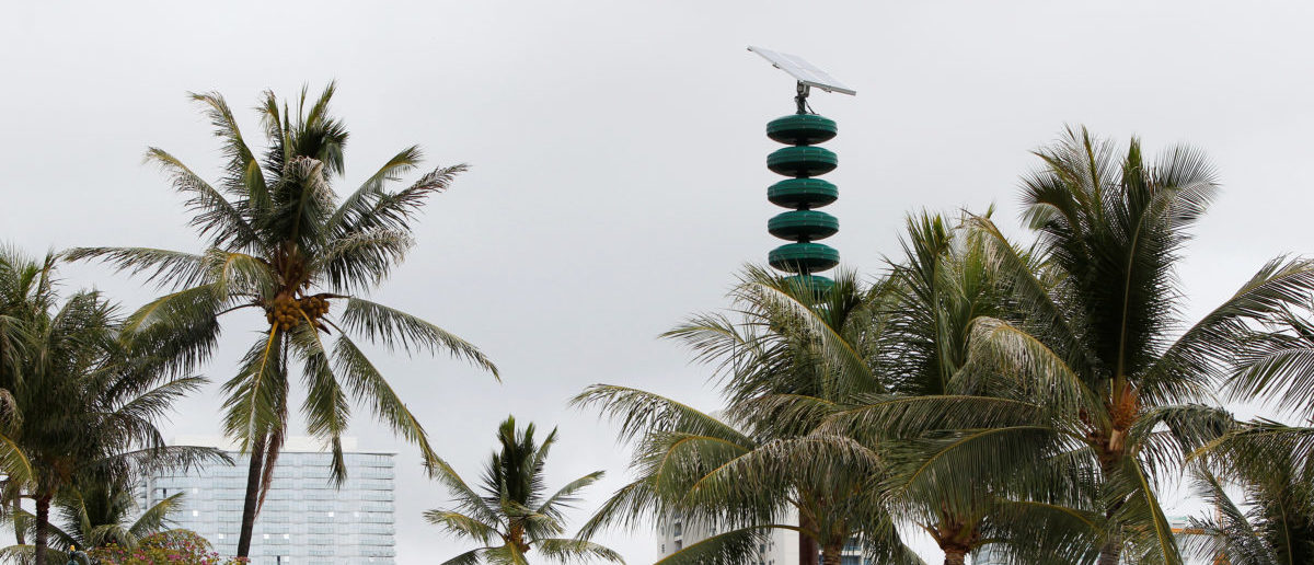 A tsunami warning tower is seen nestled in between palm trees at Kakaako Waterfront Park in Honolulu, Hawaii, November 28, 2017. REUTERS/Marco Garcia