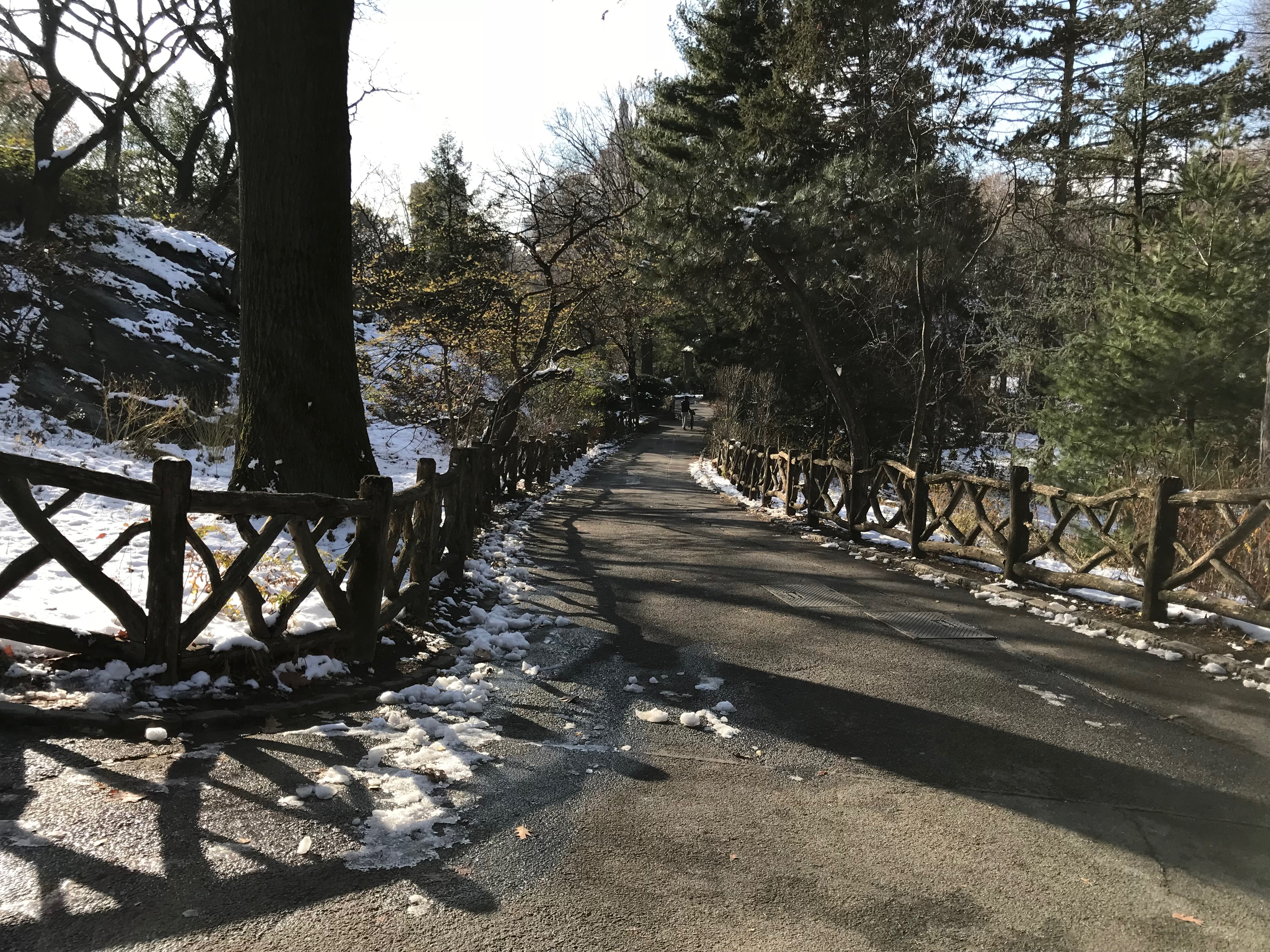 A path in the Shakespeare Garden in Central Park in New York City. (DCNF/Ethan Barton)