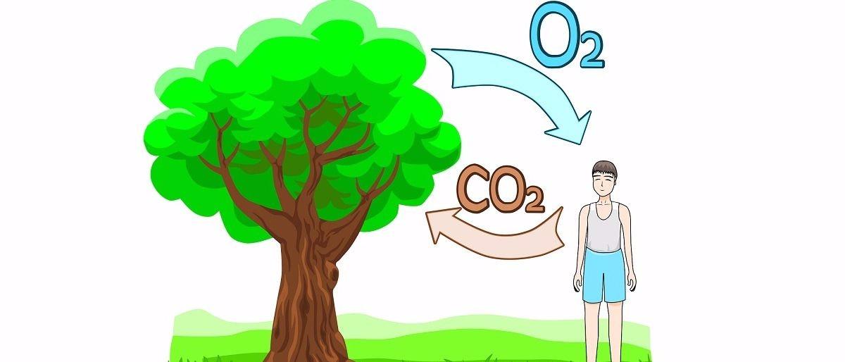carbon dioxide Shutterstock/Sergey Merkulov