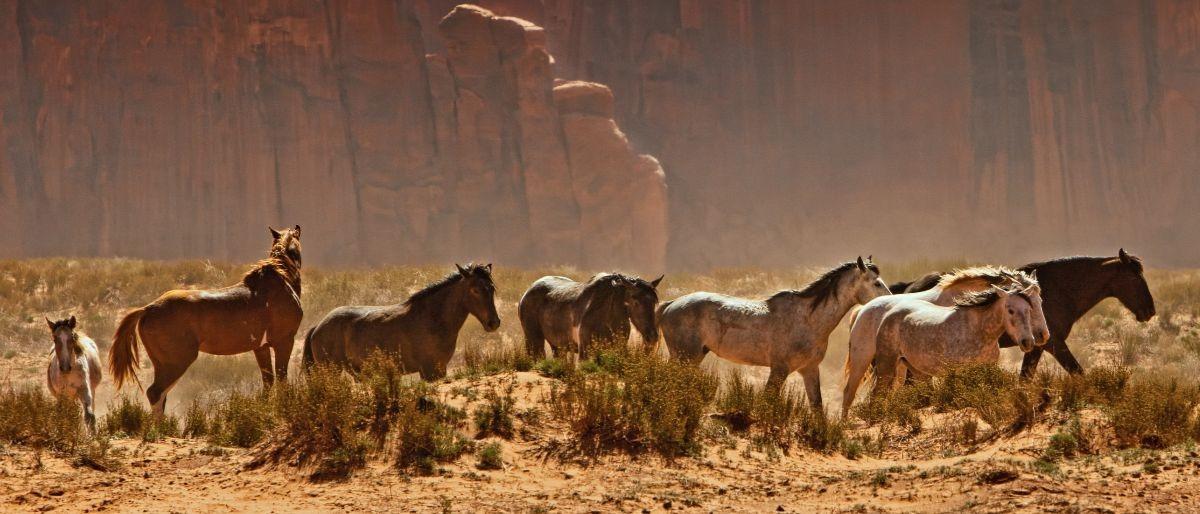 wild horses Shutterstock/Susan Schmitz