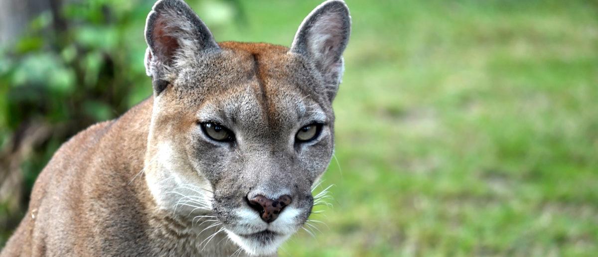 Fish Cat Cougar Reviews