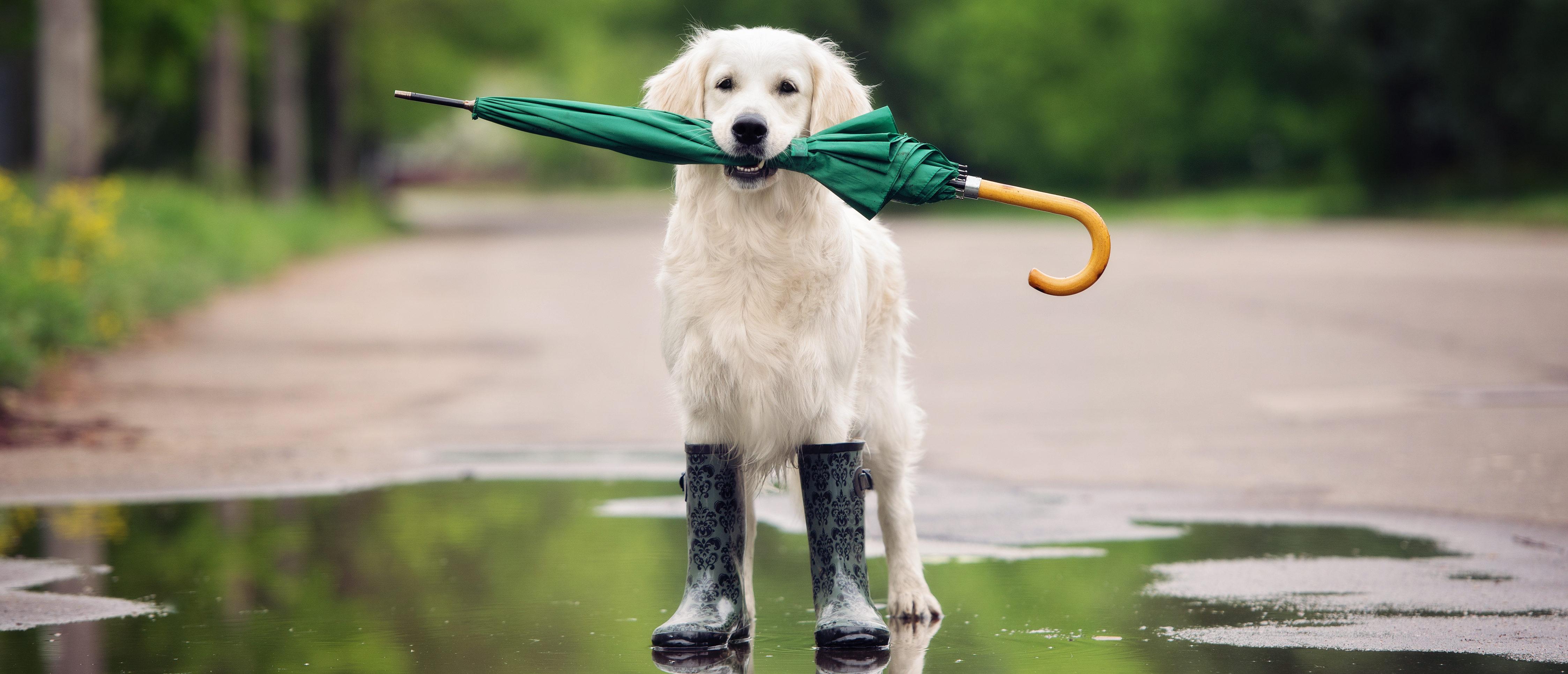 Dog_RainSource: otsphoto/Shutterstock