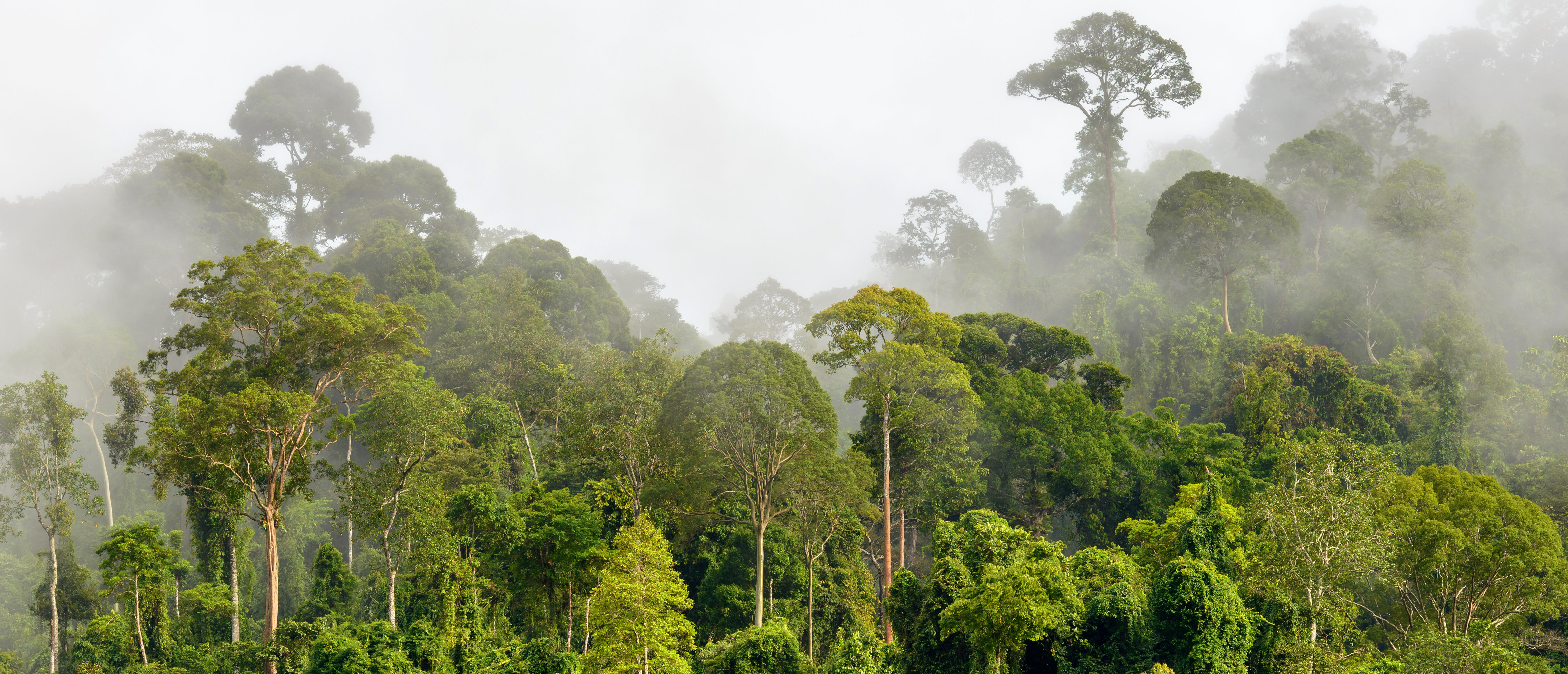 The rainforest in a fog. (Shutterstock)