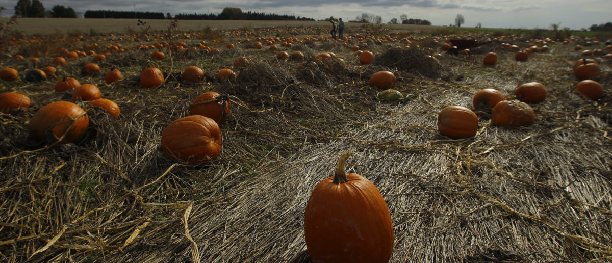 Pumpkins are seen under dark skies in a field at Mayne's Tree Farm in Buckeystown, Maryland October 27, 2012. Hurricane Sandy closed in on the United States on Saturday as it threatened to hit the eastern third of the country with torrential rains, high winds, major flooding and power outages a week before U.S. presidential and congressional elections. REUTERS/Gary Cameron