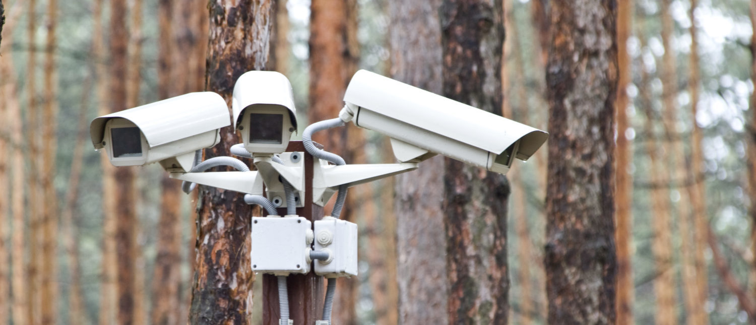 Surveillance cameras in the woods. [Shutterstock - Nomad_Soul]