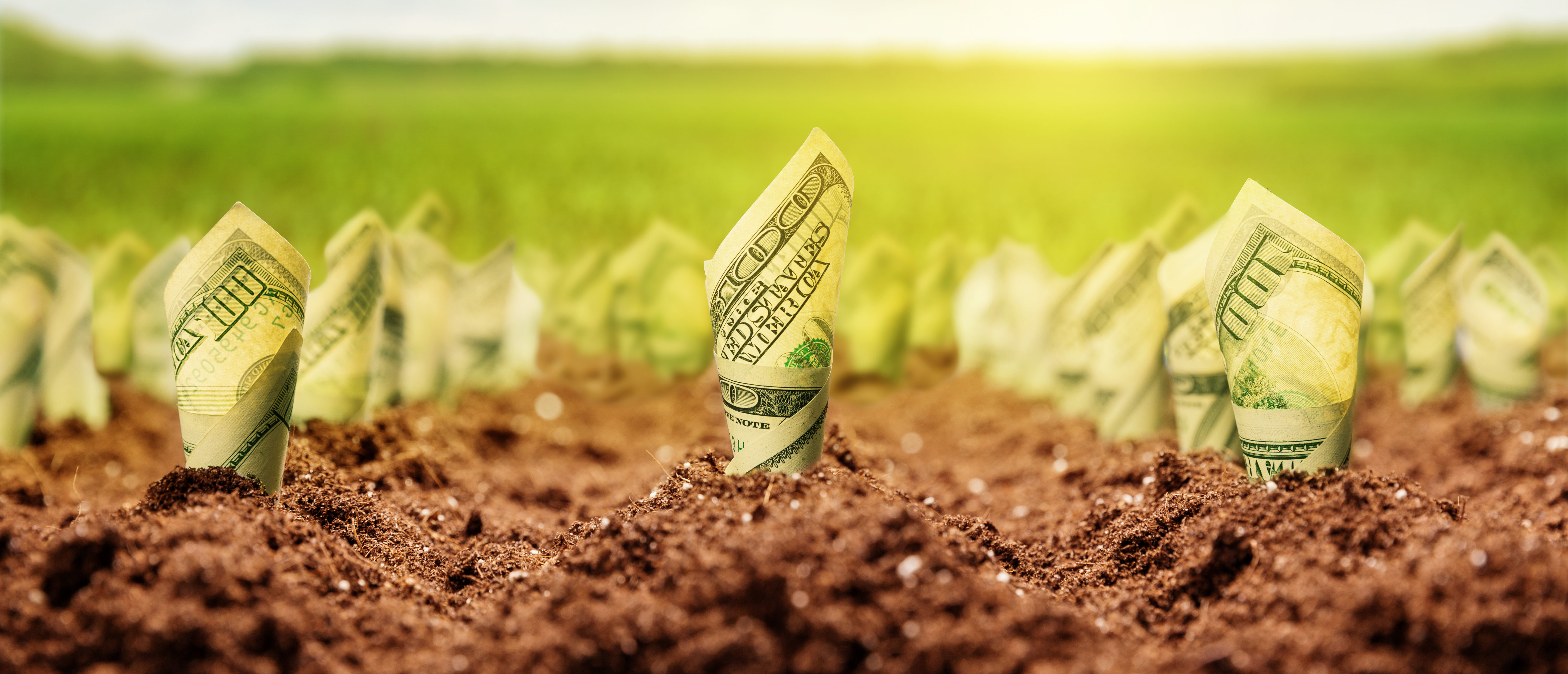 Money grows out of ground Shutterstock