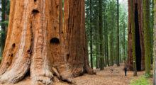 Sequoia National Park --- Est. 1890, President Benjamin Harrison (Photo: Shutterstock)