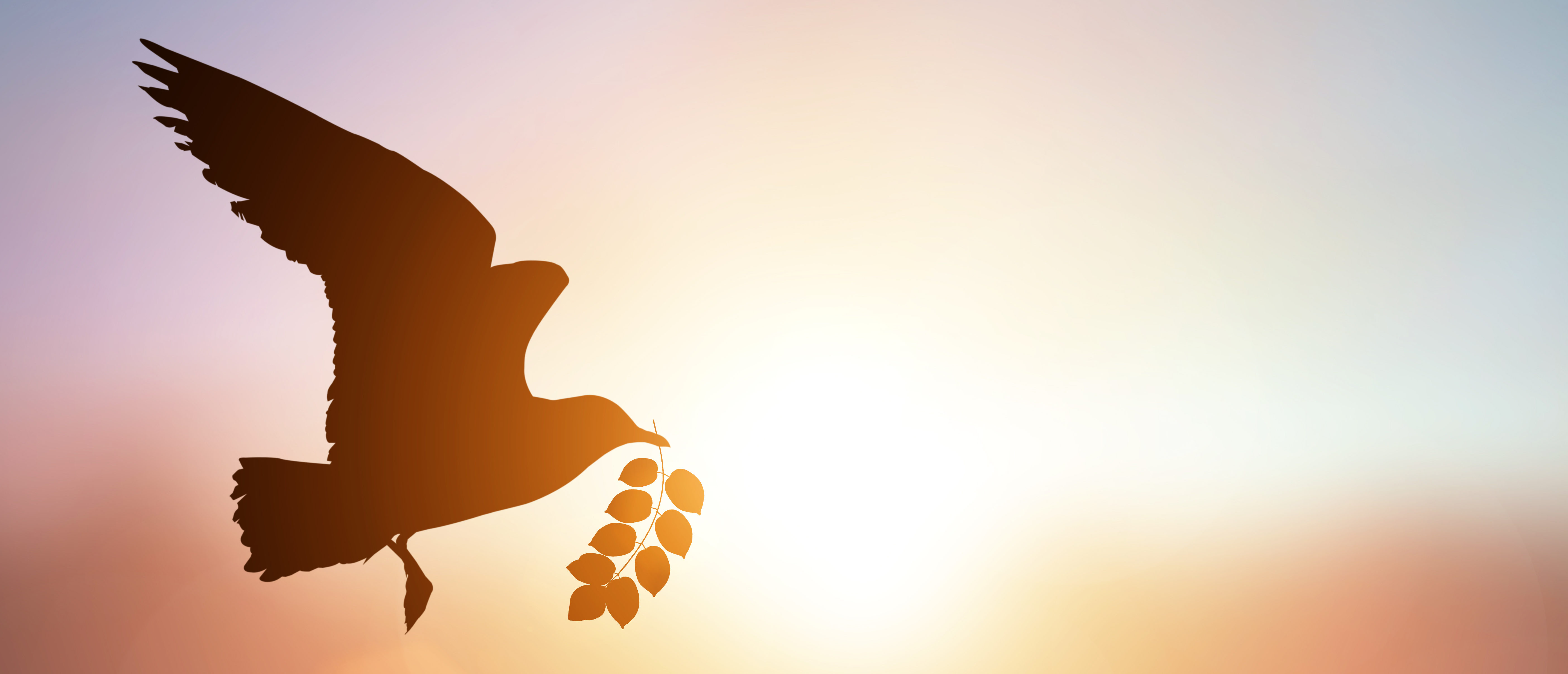 A Dove flies with an olive branch. (Shutterstock)