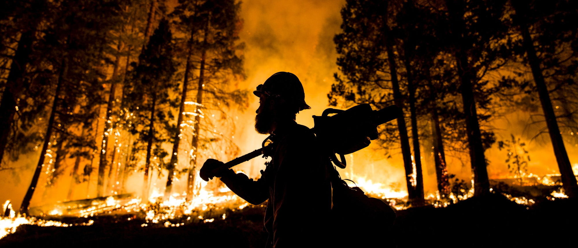 "A Los Padres National Forest firefighter watches a controlled burn on the so-called ""Rough Fire"" in the Sequoia National Forest, California, August 21, 2015. REUTERS/Max Whittaker"