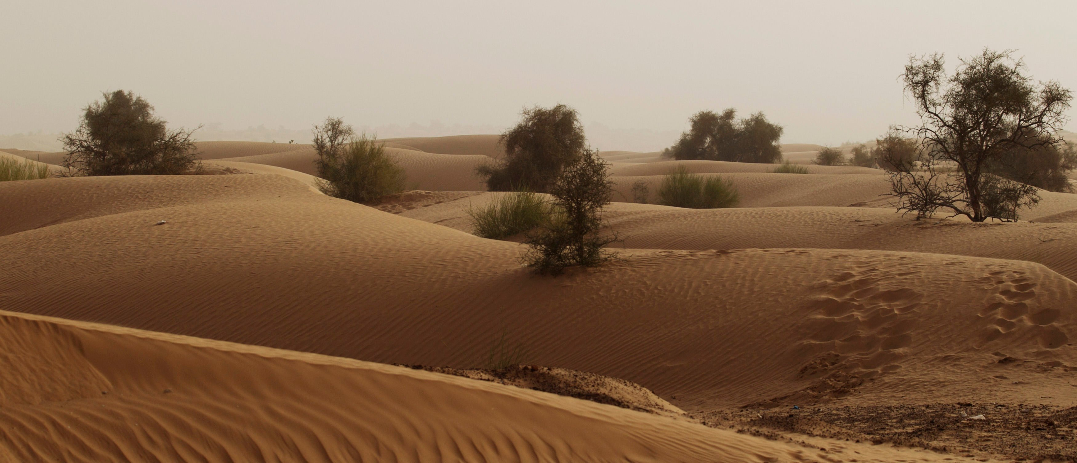 Sand dunes are seen in the Sahara Desert outside the town of Aleg, Mauritania, May 20, 2012. REUTERS/Joe Penney (MAURITANIA - Tags: ENVIRONMENT) | There's Climate Alarmism About The Sahara