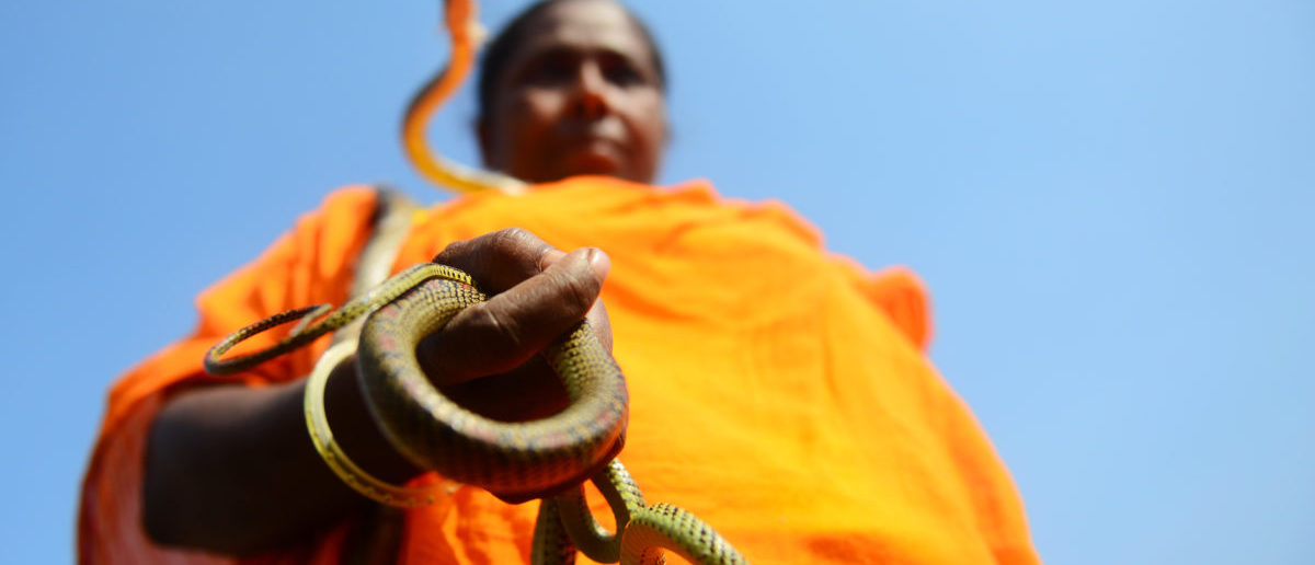 A Bangladeshi snake charmer holds snakes during a rally held to mark the country's 41st Victory Day in Dhaka on December 16, 2012. Bangladesh won independence from Pakistan after a bitter nine-month war in 1971 led by the country's founder Sheikh Mujibur Rahman, which is celebrated every year on December 16. AFP PHOTO/ Munir uz ZAMAN (Photo credit should read MUNIR UZ ZAMAN/AFP/Getty Images)