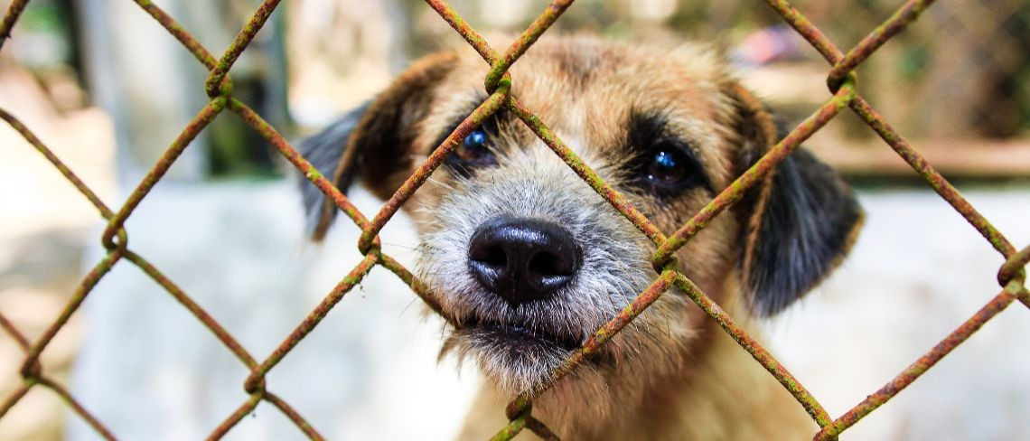 dog behind fence Shutterstock/Kidd Silencer