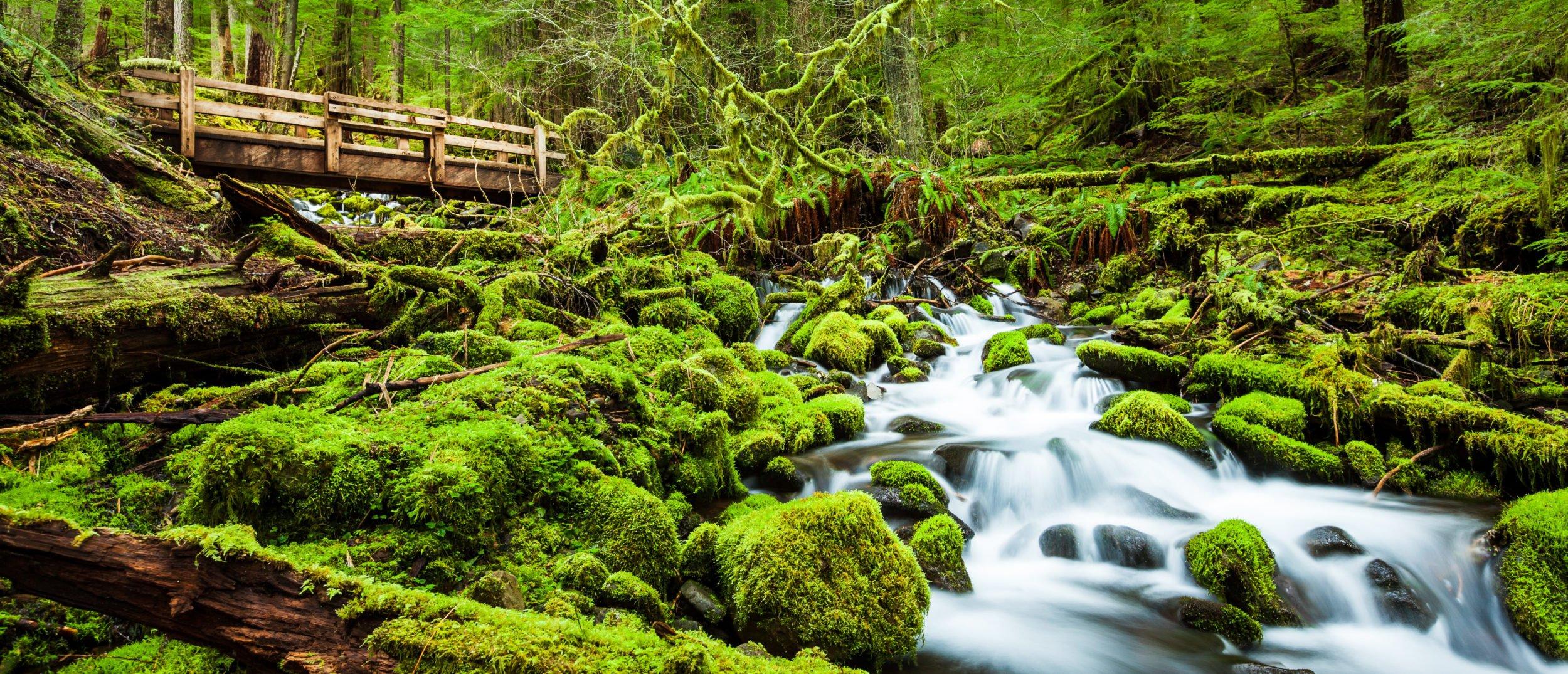Beautiful cascade waterfall in Sol Duc falls trail, Olympic National Park, Washington. (Photo: Shutterstock)