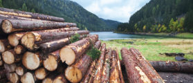 Save The Earth: Chop Down Redwoods, Use Plastic Bags, And Eat GMOs