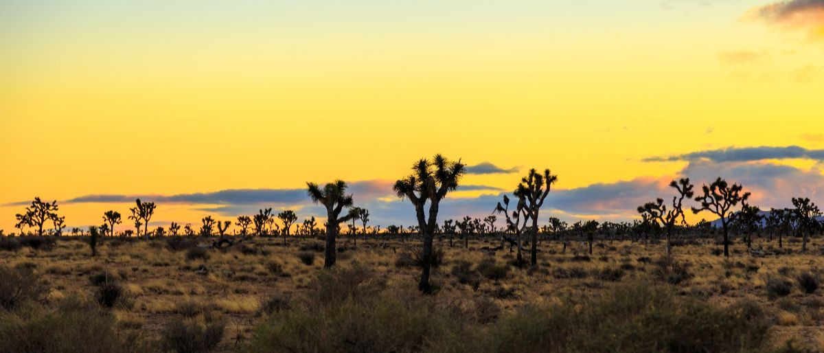 Joshua Tree California desert Shutterstock/ZAB Photographie