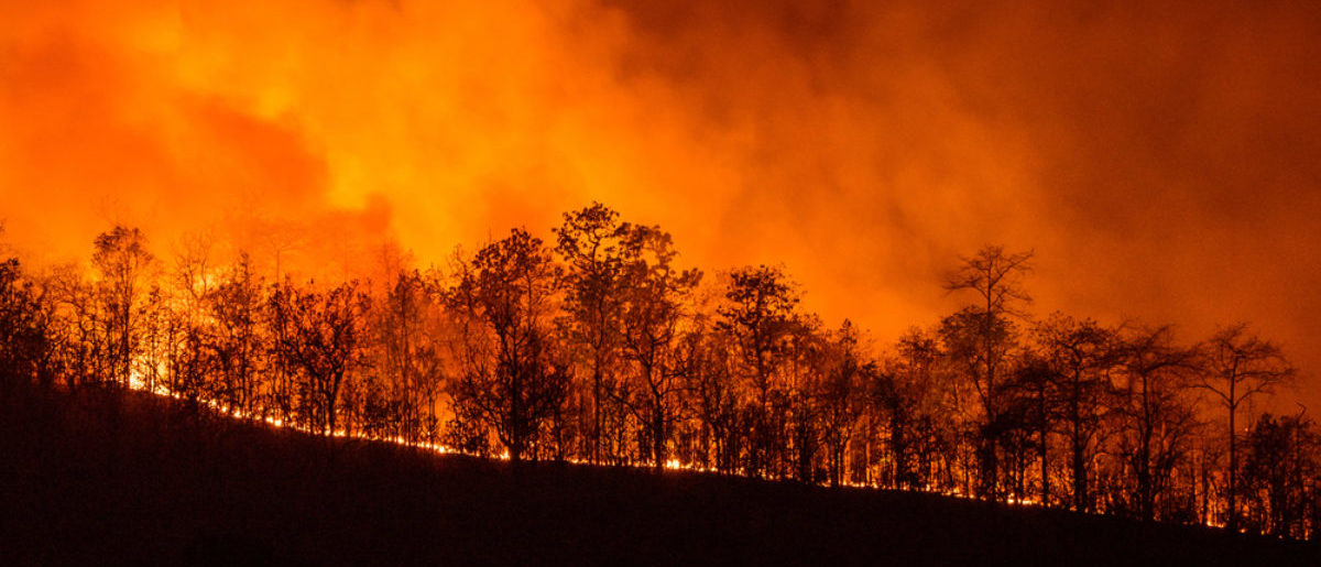 Wildfire (Credit: Shutterstock)