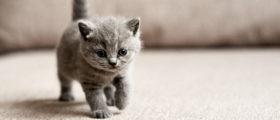 Kitten [Shutterstock, by Zhalabkovich Yauheniya