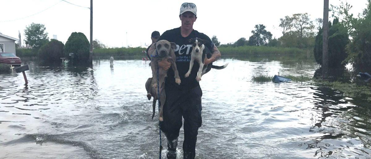 PETA at Hurricane Harvey. Photo courtesy of PETA