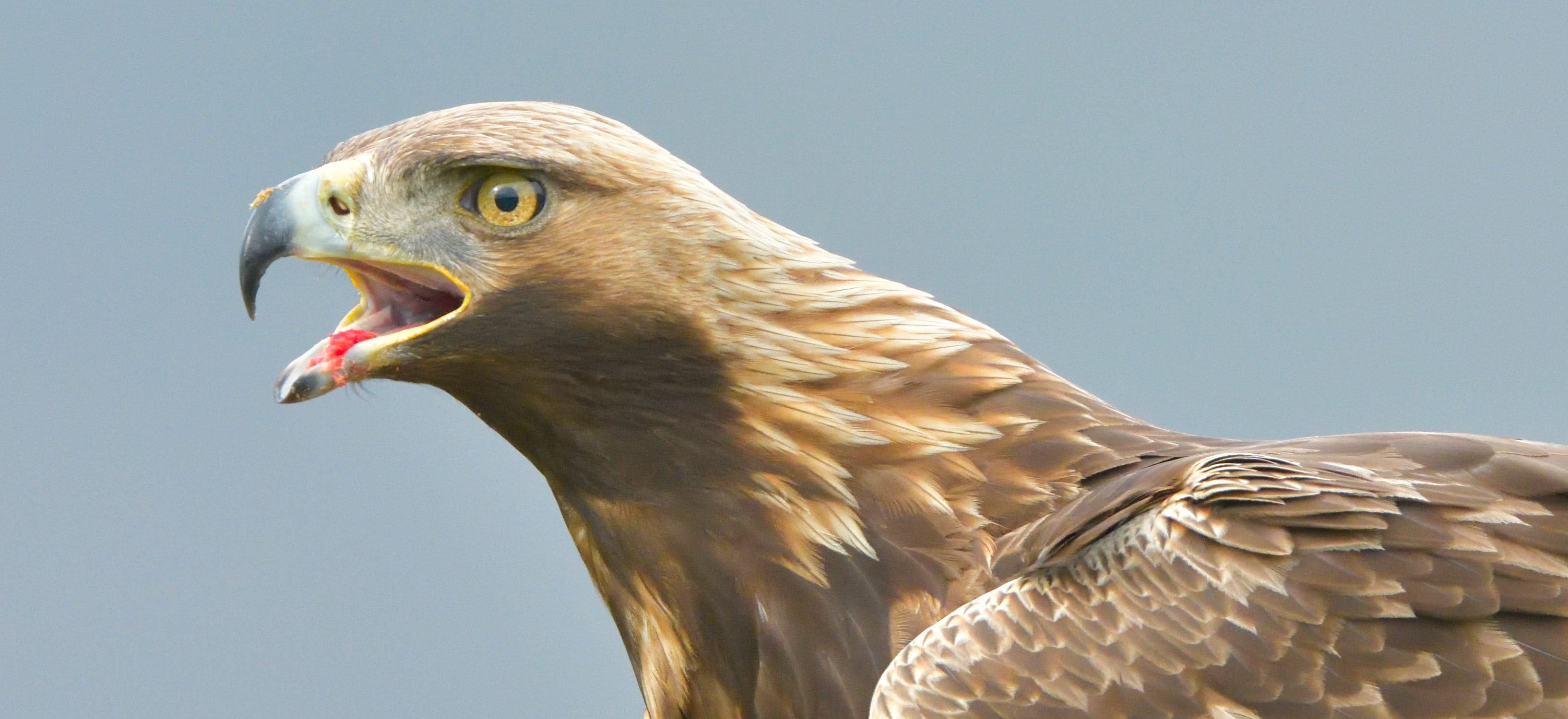 Wind Turbines Kill Thousands Of Birds Every Year. Shutterstock