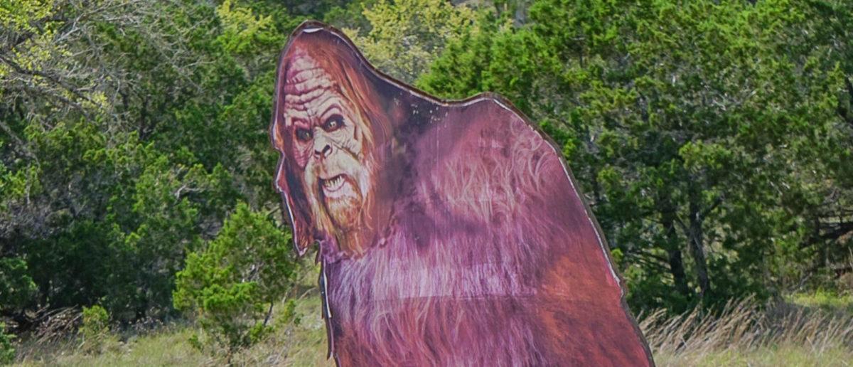 A Bigfoot cutout stands in a field. Shutterstock image via user Jacqueline F Cooper