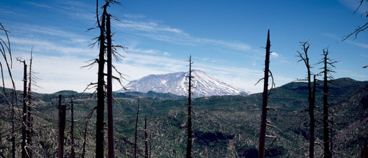 UNITED STATES - AUGUST 04: Burned forestland in the foreground, Mount St. Helens volcano in the distance, several years after a cataclysmic eruption in 1980 (Photo by Carol M. Highsmith/Buyenlarge/Getty Images)