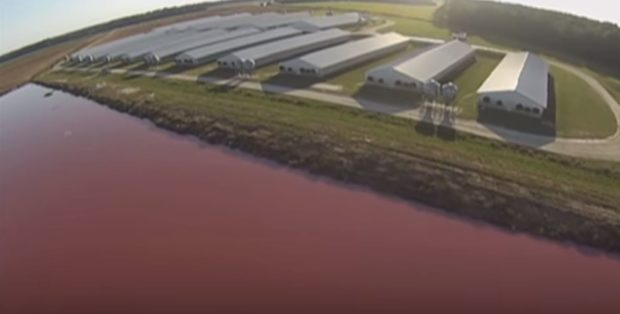A drone captures footage of a hog farm and lagoon. YouTube screenshot/SpeciesismTheMovie