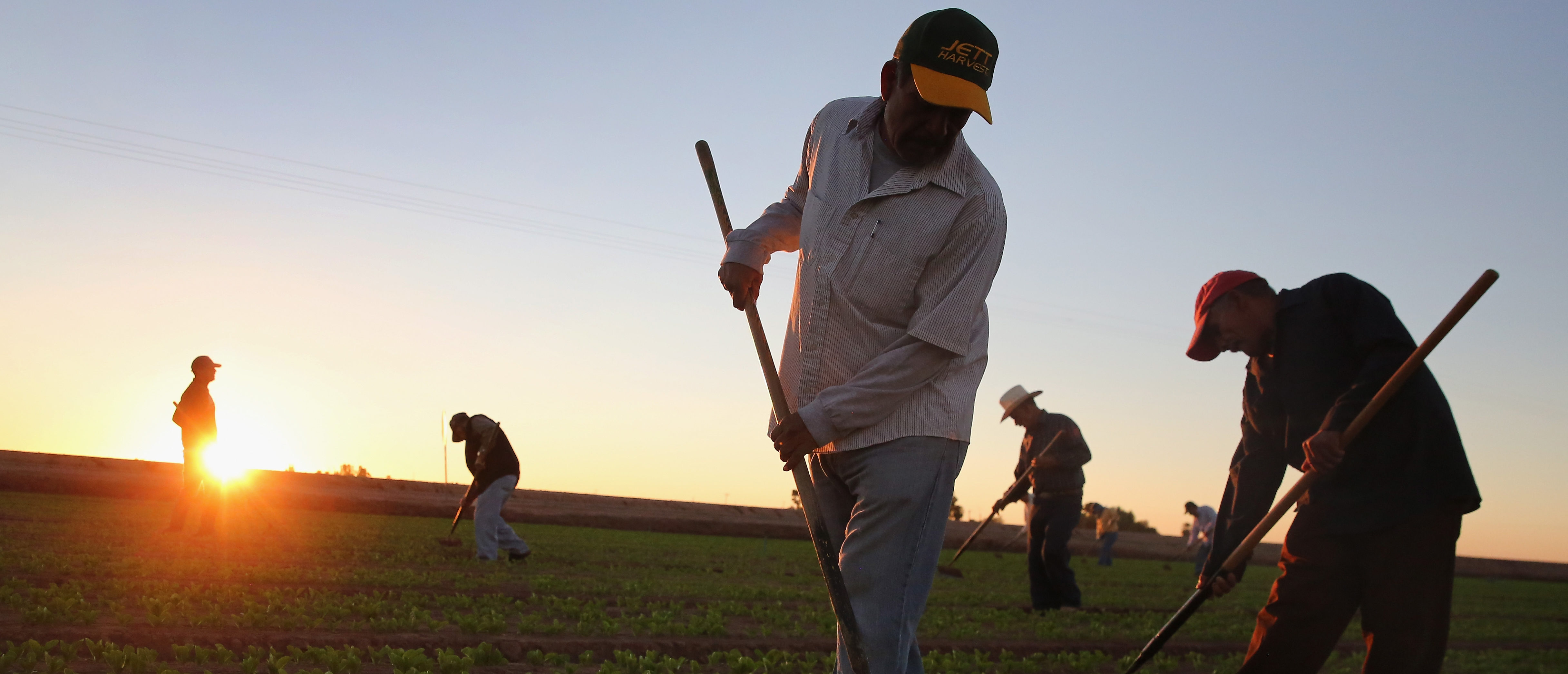 HOLTVILLE, CA - OCTOBER 08: Mexican agricultural workers cultivate lettuce on a farm on October 8, 2013 in Holtville, California. Thousands of Mexican workers cross the border legally each night from Mexicali, Mexico into Calexico, CA, where they pick up work as agricultural day laborers in California's fertile Imperial Valley. Although the Imperial Valley, irrigated from water diverted from the Colorado River, is one of the most productive agricultural areas in the United States, it has one of the highest unemployment rates in California, at more than 25 percent. Mexican farm workers commute each day from Mexicali to work in the fields for about $9 an hour, which many local U.S. residents shun as too low pay. (Photo by John Moore/Getty Images)