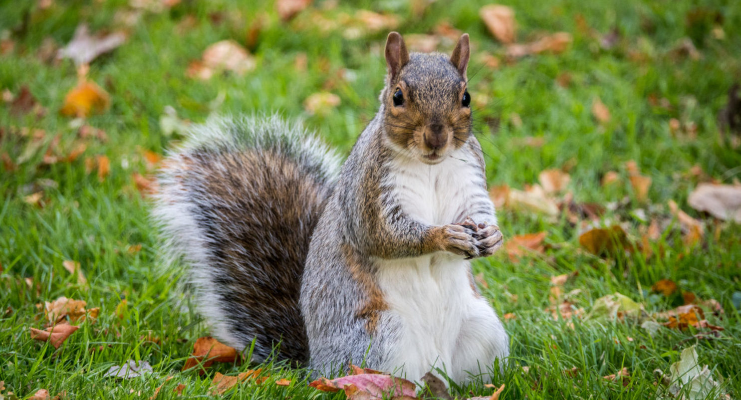 Woman Delays Flight For 2 Hours, Gets Kicked Off Plane For Traveling With 'Emotional Support' Squirrel