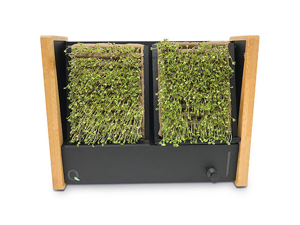 Normally $80, this microgreen garden is 16 percent off